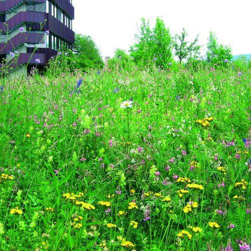 Blumenwiese auf der Ebene 7