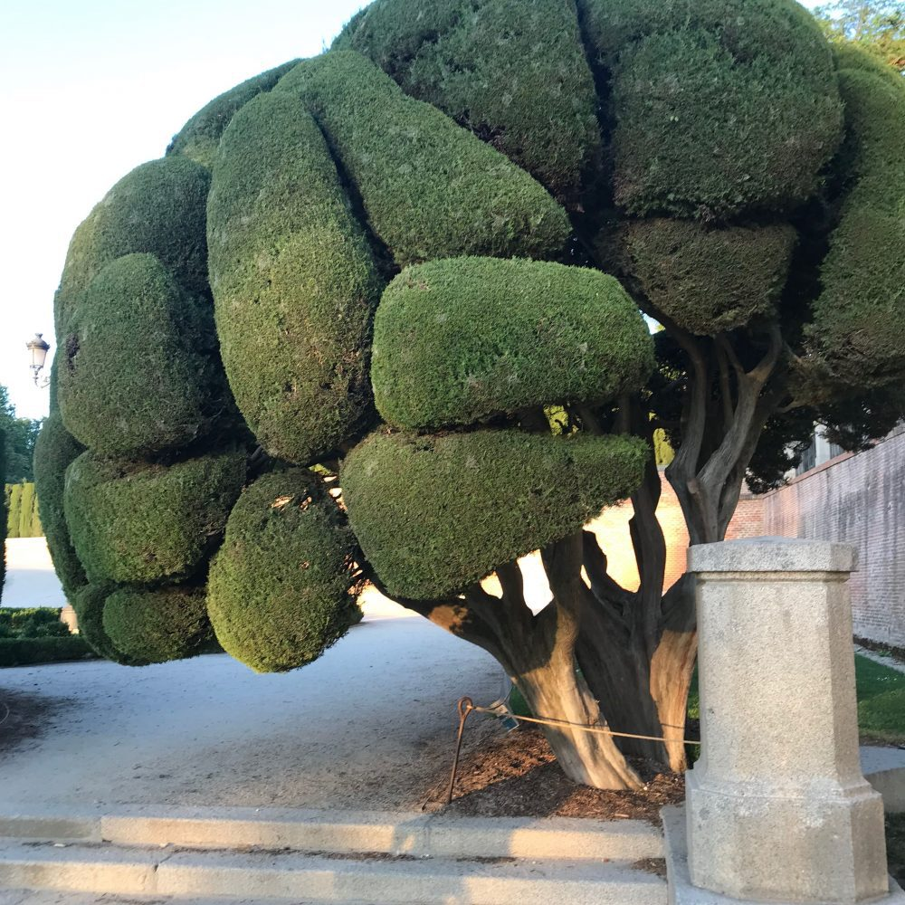 árbol-retiro-parques y jardines