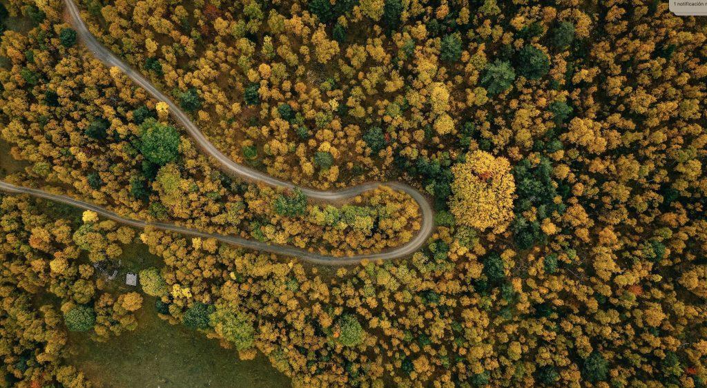 Bosques desde el aire_Cataluña